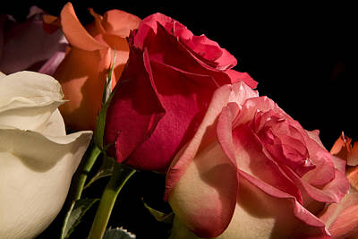Photograph - Roses by Avril Christophe