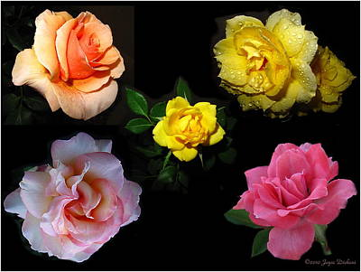 Photograph - Roses Beautiful by Joyce Dickens