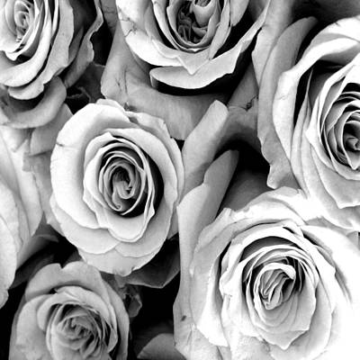 Roses Royalty-Free and Rights-Managed Images - Roses - Black and White by Marianna Mills