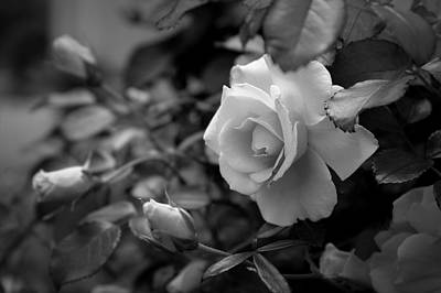 Photograph - Roses - Bw by Beth Vincent