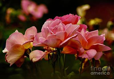 Photograph - Roses By The Bunch by Craig Wood