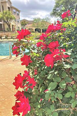 Photograph - Roses By The Pool by Janette Boyd