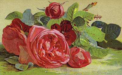 Roses Print by English School