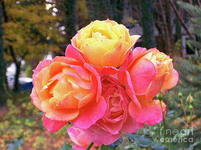 Kingston On Photograph - Four Roses On One Stem by Mary Ann Weger