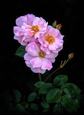 Photograph - Roses In An Italian Garden by Carolyn Derstine