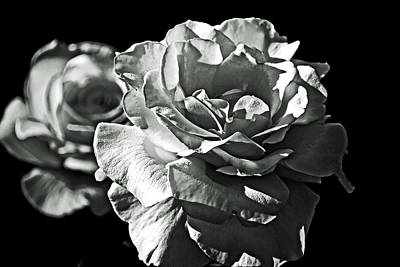 Photograph - Roses In Black And White. by Bill Jonscher