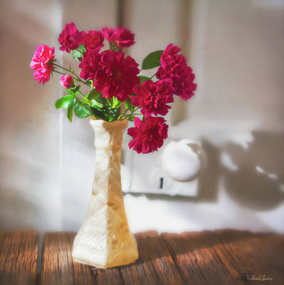 Photograph - Roses In Morning Light And Shadow by Anna Louise