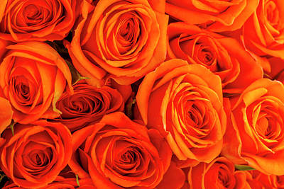 Photograph - Roses In Orange by Teri Virbickis