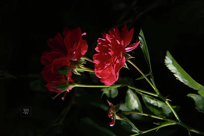 Photograph - Roses In The Afternoon Light by Yvonne Wright
