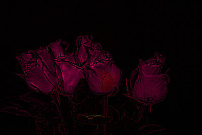 Photograph - Roses In The Dark by Cathy Harper