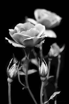 Photograph - Roses In The Garden Black And White by Jennie Marie Schell