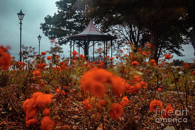 Photograph - Roses In The Park by Marc Daly