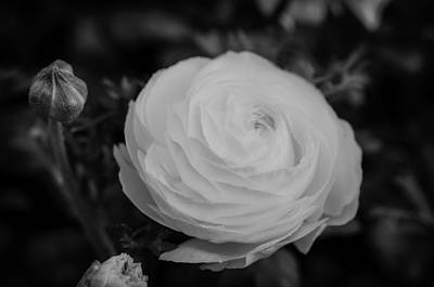 Photograph - Roses In The Spring by Miguel Winterpacht
