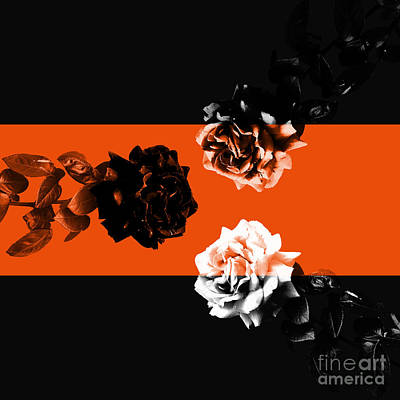 Roses Interact With Orange Art Print