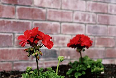 Photograph - Wall Flowers by Joseph Hawkins