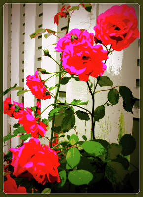 Digital Art - Roses On A Fence by Susan Lafleur