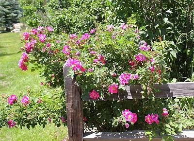 Global Design Shibori Inspired - Roses on Fenceling by Jill Myers