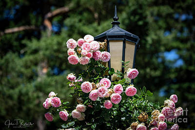 Photograph - Roses On Street Lamp by John Roberts