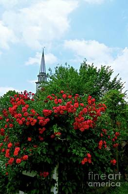 Photograph - Roses On The Fence In Mauricetown by Nancy Patterson