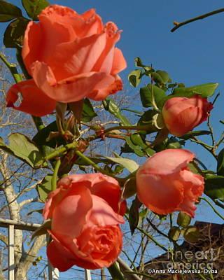 Folkartanna Photograph - Roses On The Sky by Anna Folkartanna Maciejewska-Dyba
