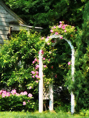 Blooms Photograph - Roses On Trellis by Susan Savad