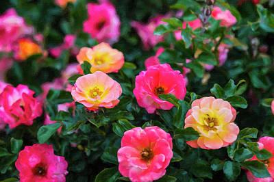 Photograph - Roses by Roy Nierdieck
