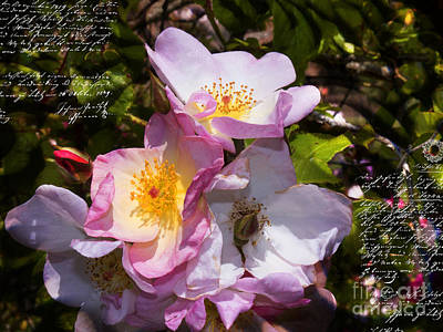 Photograph - Roses Speak Of Love In The Language Of The Heart by Brenda Kean