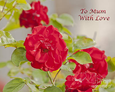 Photograph - Roses To Mum With Love by Terri Waters