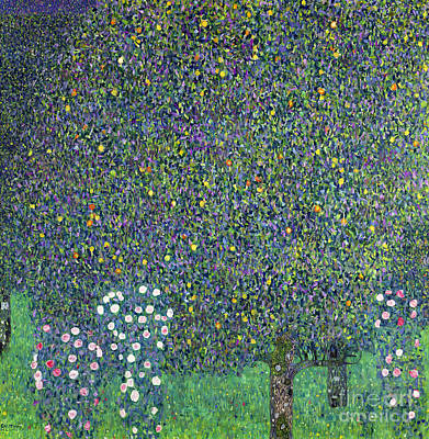 1905 Painting - Roses Under The Trees by Gustav Klimt