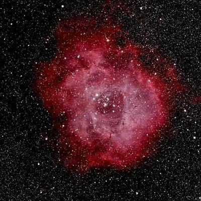 Photograph - Rosette Nebula by Tony Sarra