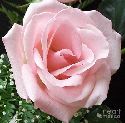 Rosey Rose Original