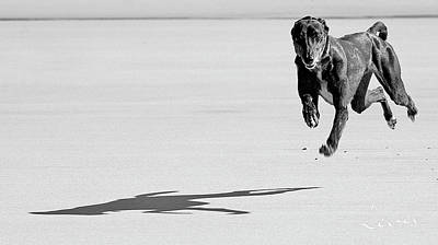 Photograph - Rosie In Flight by Roger Lever
