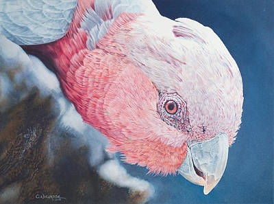 Cockatoo Mixed Media - Rosy Outlook by Carole Niclasse