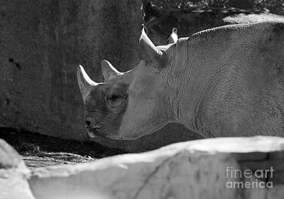 Photograph - Rosie Rhino Black And White by Karen Adams