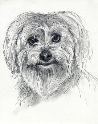 Drawing - Rosie by Tim Thorpe