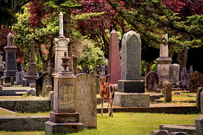 Photograph - Ross Bay Cemetery - Victoria British Columbia by Peggy Collins