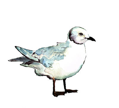 Painting - Ross's Gull by Abby McBride