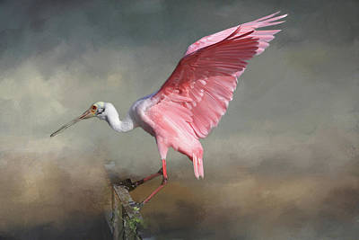 Spoonbill Photograph - Rosy by Donna Kennedy