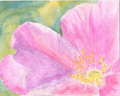 Wildflower Painting - Rosy Glow With A Wild Rose Rosa Sp by Susan Archer
