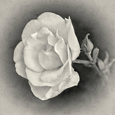 Photograph - Rosy Outlook by Leda Robertson