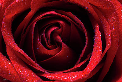 Photograph - Rosy Red by Keith Hawley