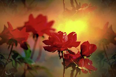 Rosy Sunset Reflections Art Print