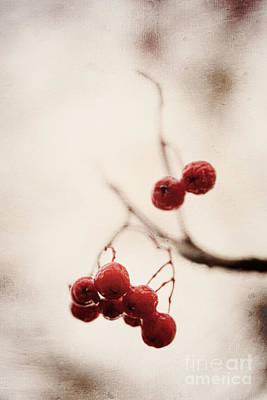 Rote Beeren - Red Berries Art Print