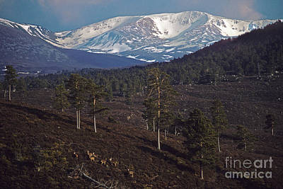 Photograph - Rothiemurchus Forest To Braeriach by Phil Banks