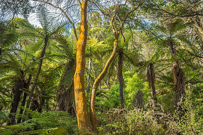 Photograph - Rotorua Forest by Racheal Christian