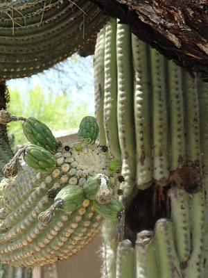 Photograph - This Cactus Is Rotten To The Core by Mozelle Beigel Martin