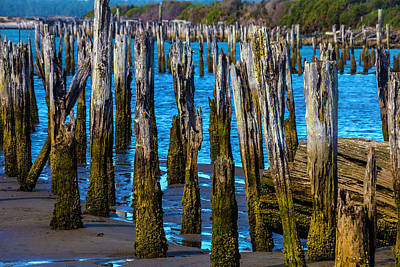 Rottening Pier Posts Print by Garry Gay