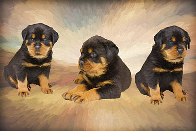 Painting - Rottie Puppies - Painting by Ericamaxine Price