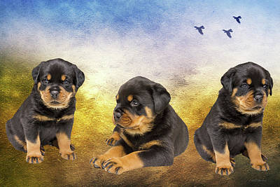 Photograph - Rottie Puppies - Photograph by Ericamaxine Price