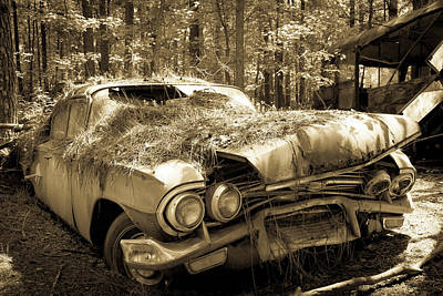 Photograph - Rotting Classic by Lindy Grasser